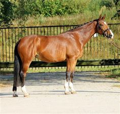Paarden te koop: g