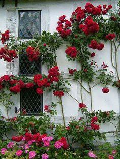 Red flower window