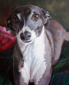 PINOT, original painting by artist Suzanne Berry Art Painting Gallery, Artist Gallery, Painting & Drawing, Greyhound Art, Italian Greyhound, Illustrations, Illustration Art, Dachshund, Animal Paintings