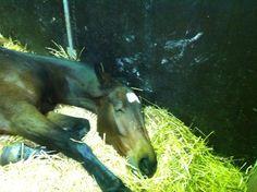 Meritato riposo! #fieracavalli #whyilovehorses