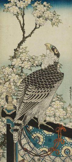 Hawk and Cherry Blossoms.   Woodblock print, about 1834, Japan, by artist Katsushika Hokusai