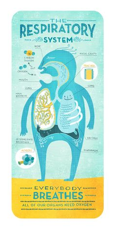 Cute Illustrations Help Kids Identify Different Parts Of The Human Anatomy - DesignTAXI.com