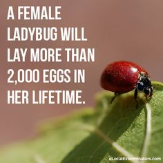 Fun Fact Friday: Can you imagine how long it would take to give ...