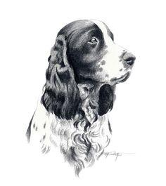 SPRINGER SPANIEL Dog Pencil Drawing ART Print Signed by Artist DJ Rogers