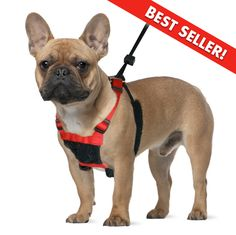 YUP! by Sporn Mesh Non-Pull Harness: The Sporn Company