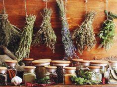 Αφροδισιακά βότανα και τροφές - Διοσκουρίδης, του 'Ομηρου Ερμείδη - Erbe afrodisiache e alimenti - Dioskouridis, di Omero Ermeidis - Aphrodisiac herbs and foods - Dioskouridis, of Homer Ermedy - Афродизиакные травы и продукты питания - Диоскуридис, Гомера High Antioxidant Foods, North Garden, Anti Oxidant Foods, Weight Loss Herbs, Herbal Magic, Healthy Herbs, Healthy Hair, Think Food, Drying Herbs