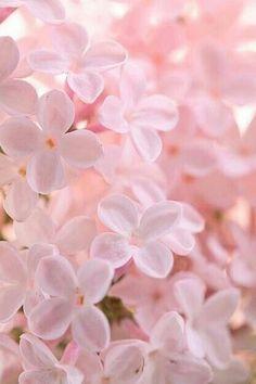 Flores delicadas para feed branco e rosa