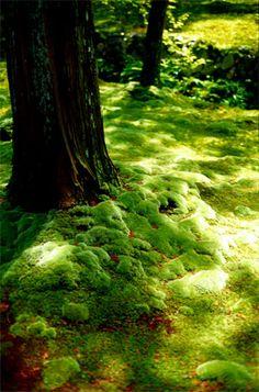 西芳寺 --Moss Temple--