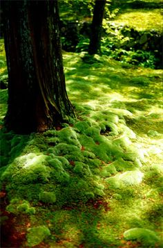 In the forest - Moss Temple