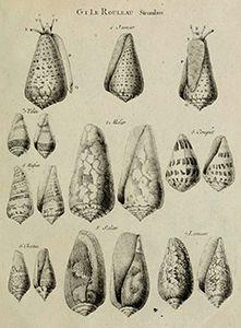 Michel Adanson Ilustración científica del siglo XVIII