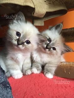 Inquisitive kittens