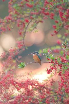 """Not sure whether to pin this on my bird watching board or my """"amazing nature photography"""" file.  The color and composition are exquisite!"""
