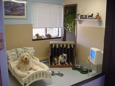 pet rooms | ... with Dog's hair.: How to Transform your spare room into a Dog Room
