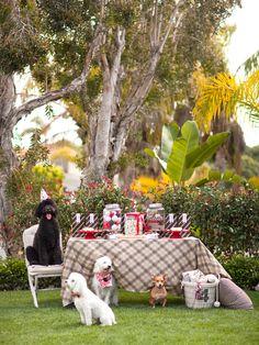 Festa para cachorro