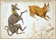 """""""Canis Major as depicted in Urania's Mirror, a set of constellation cards published in London c.1825. Next to it are Lepus and Columba (partly cut off)."""""""