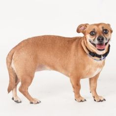 Lady is available for adoption at our Mission campus!