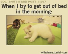 EVERY MORNING!!!!
