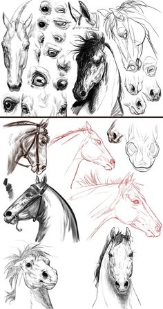 Mystery Project-Batch 4 by ColossalBeltloop Horse Head Drawing, Horse Drawings, Animal Drawings, Art Drawings, Cartoon Sketches, Animal Sketches, Art Sketches, Horse Sketch, Horse Anatomy