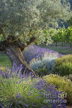 Southern France Garden Print by Brian Jannsen Mais