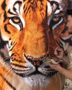 Discover recipes, home ideas, style inspiration and other ideas to try. Acrylic Painting Techniques, Painting Videos, Art Techniques, Tiger Artwork, Tiger Painting, Watercolor Tiger, Tiger Drawing, Watercolor Paintings, Animal Paintings