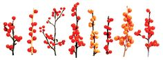 holly plant branch - Google Search