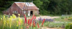 Blackberry Farm: Garden Month
