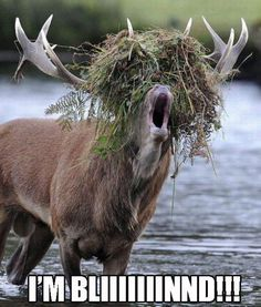 28 Best Deer Hunting Images Deer Hunting Hunting Deer