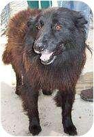 Raeford, NC - Labrador Retriever/Retriever (Unknown Type) Mix. Meet Paola, a dog for adoption. http://www.adoptapet.com/pet/6119275-raeford-north-carolina-labrador-retriever-mix