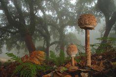 the most beautiful dangerous mushrooms11