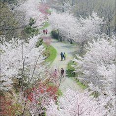 Jinhae Gu, South Korea
