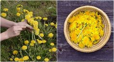 25 Remarkable Uses for Dandelions In the Kitchen Because the entire plant is edible there are a myriad of ways in which you can use dandelion for culinary purposes. 1. Sautéed Greens and Garlic With their rich mineral and vitamin content, dandelion greens are a healthy addition to any meal. Sautéing with garlic (or ginger or capers) adds flavor and negates some of the bitterness…   [read more]
