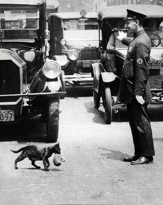 A policeman stops traffic to allow a mother cat to carry her kittens across Centre Street New York July 25 1925 [1025 x 1296]