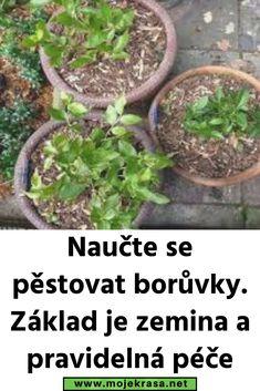 Growing Plants, Indoor Plants, Gardening, Balcony, Inside Plants, Lawn And Garden, Horticulture