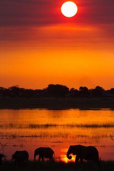 Elephants at Sunset - Chobe, Botswana |by: [Joe Killick]