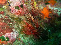 Under Water Thailand