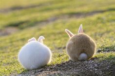 A pair of bunnies enjoying the outdoors together