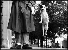 Não resisti! Quem acompanha o blog já sabe que sou apaixonada por cachorros. E o Elliott Erwitt também. Por isso, esta semana tem mais uma dose de Elliott Erwitt para vocês. Elliott Erwitt ama os animais e eles foram presença constante em sua obra. Vem ver!♡ Fotografias retiradas do acervo da Magnum. Site oficial do …