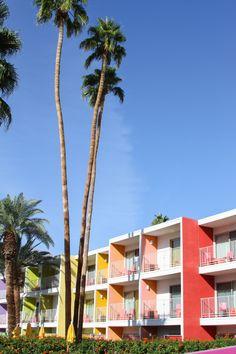 Palm Springs // The Saguaro