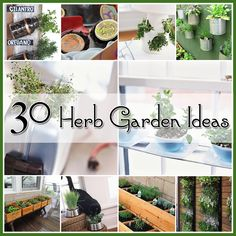 """Herb Gardens 30 great Herb Garden Ideas. """"The season is telling you to start your Herb Garden! Herb Gardens are FABULOUS!!!! Your pasta is crying for fresh basil…that focaccia bread needs it's rosemary and what dish doesn't want a touch of some fresh chives!"""" Click thru to The Cottage Market to see these 30 Fabulous Herb Garden Ideas! #herbgardens"""
