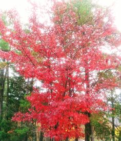 Hanging Rock State Park Danbury NC