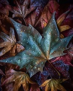 Canon Photography, Photography Photos, Lifestyle Photography, Butterfly Flowers, Butterflies, Autumn Inspiration, Autumn Leaves, Plant Leaves, Earth