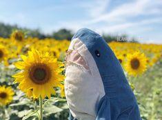 Cute Shark, Baby Shark, Shark Meme, Shark Plush, Iphone Wallpaper Vsco, Big Flowers, Easy Drawings, Cover Photos, Character Inspiration