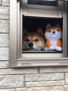 hello pls play with us floofers Fluffy Animals, Animals And Pets, Baby Animals, Cute Puppies, Dogs And Puppies, Doggies, Japanese Dogs, Cute Cats And Dogs, Cute Funny Animals