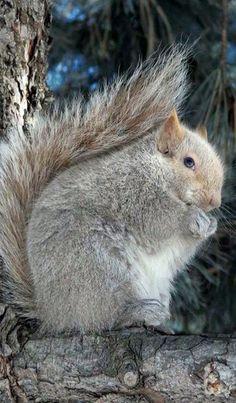 Beautiful blue eyed squirrel ❊