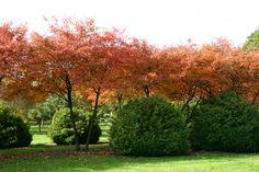 I profumi e i colori dell'autunno :: FIORI&FORCHETTE