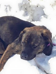 R https://www.facebook.com/CT.Lost.Pets/posts/759176087537602 Photos of Cheshire Animal Control  Melissa BonitoCheshire Animal Control Follow · 21 hrs ·    Missing dog Ryder plott hound brindle 50 pounds call 860-977-2552 do not chase please