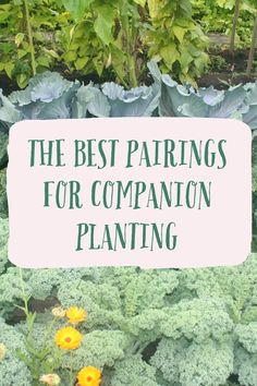 Attract beneficial insects, deter pests using an organic method, and promote diversity. Companion planting is an organic, natural way of promoting high yields in your organic garden. This practice has been practiced by farmers and gardeners for centuries.