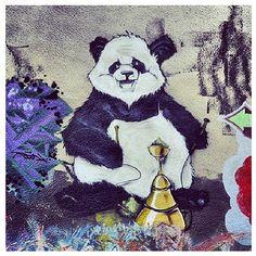 hookah smoking Panda