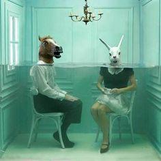 at kafası tavşan beynine dur demiş gel, iki çift laf edelim.