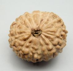 Rudraksha', also 'Rudraksh', Sanskrit: rudrākṣa ('Rudra's Eyes'): 15-Mukhi [15-Faced] Rudraksha [Elaeocarpus ganitrus; Family: Elaeocarpaceae] seed from Indonesia. Ruled by Pashupatinath Shiva attracts abundance and fulfillment. Abundance comes from detachment. Detachment is the ability to enjoy success and wealth by witnessing it and without being involved in it.